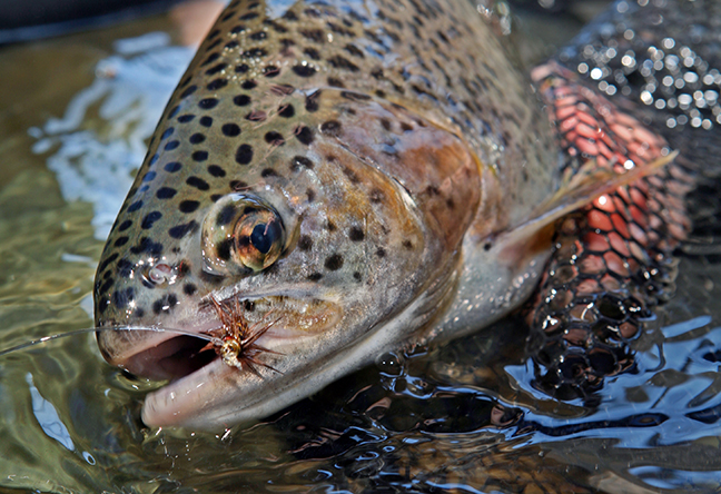 CA Fishing Calendar Feature