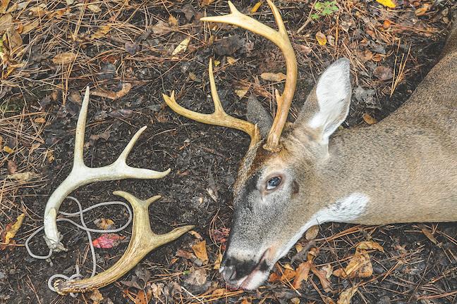 Shed Hunting Tips to Help You Bag a Big Buck Next Fall