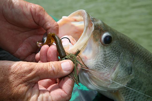 NC Fishing Calendar Feature