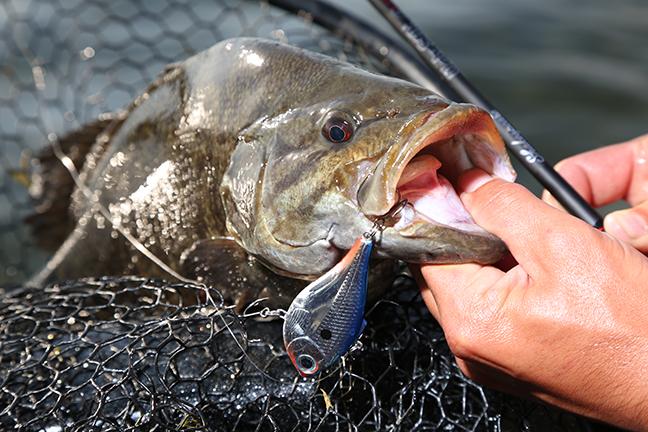 NY Fishing Calendar Feature