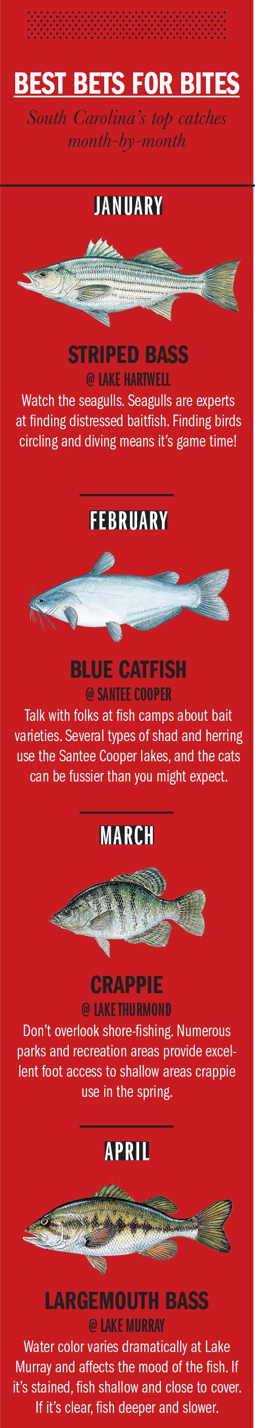 2018 South Carolina Fishing Calendar - Game & Fish