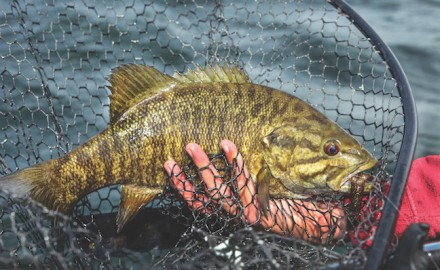 Here's a look at where the best smallmouth bass fishing is in Virginia. (Photo by Ron