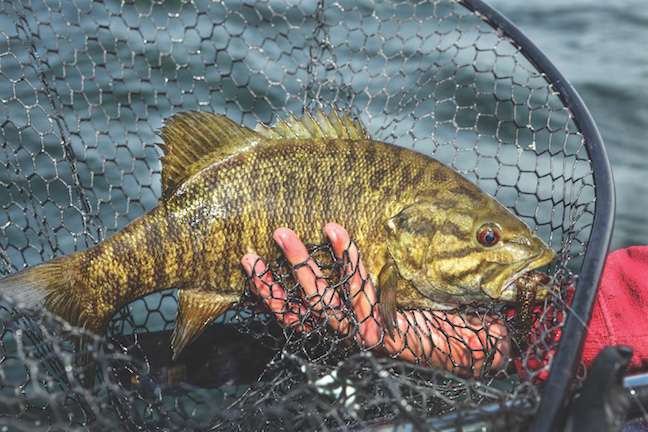 Virginia Smallmouth Bass 2018 Outlook