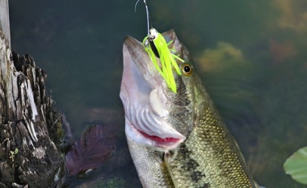 Spinnerbaits can be retrieved in many different ways, which is what makes them such a great bait.