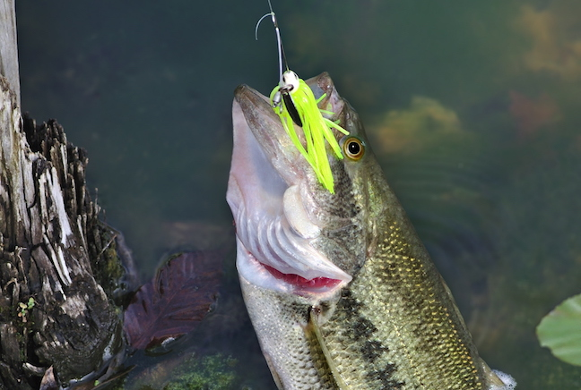 Spinnerbaits for Bass