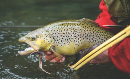 Some Golden State waters offer high catch rates, while others are known for producing big fish.