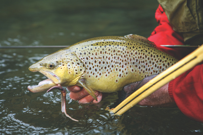 california trout destinations