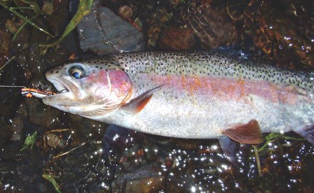 The most important thing to know about outsmarting wary trout is finding out what they eat and