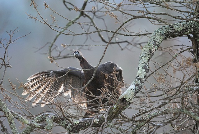South Carolina Turkey Hunting Outlook