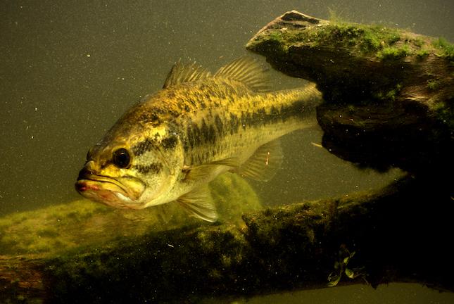 georgia bass fishing