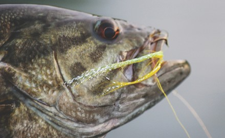 Focus on learning what types of food are available to bass this time of year to boost angling