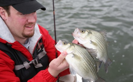 white bass spawning run