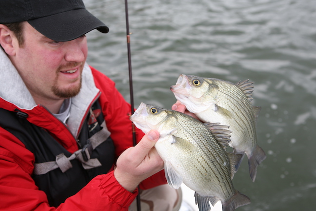 white bass spawning run