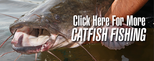 fall catfish