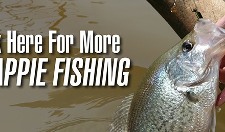 Fishing deep brush for crappie is highly predictable. (Photo by Ron Sinfelt)  During the pre- and