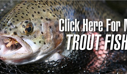 At this time of year trout are unlikely to be holding in the current and expending energy.