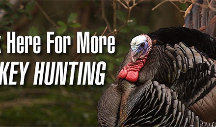 Public-land turkeys'often come in quiet, so be ready at all times for one to show