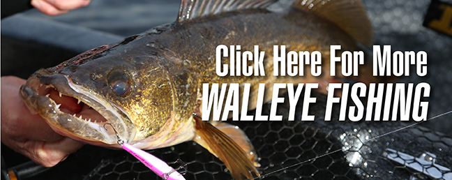 walleyes in submerged wood