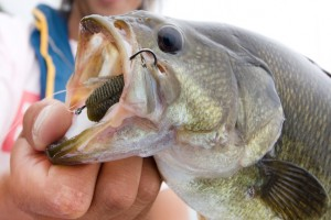 bass fishing outlook 2018