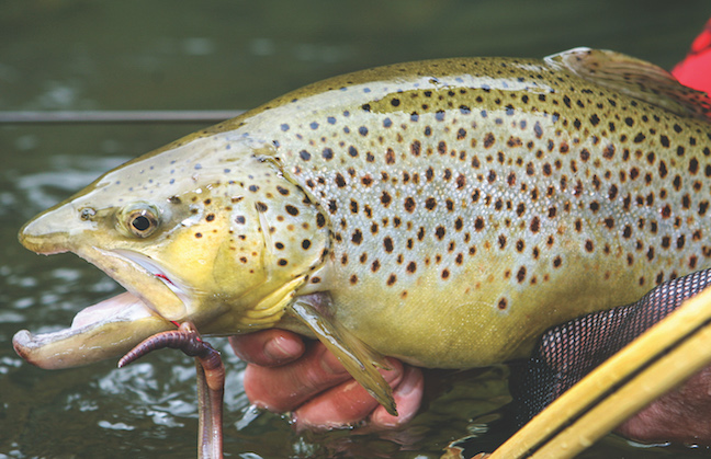 Wisconsin fishing