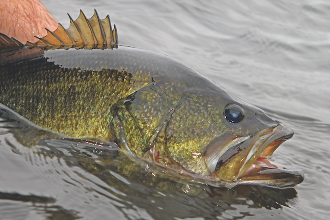 How to Catch-and-Release Bass the Right Way