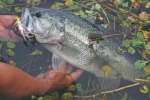 bass fishing outlook