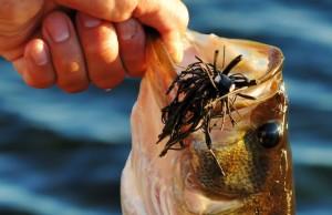 Georgia April fishing