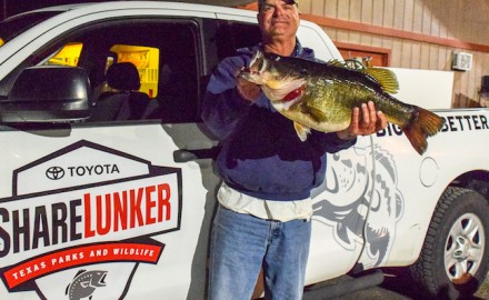 Just one week after a huge Lake Fork bass set the Texas bass fishing world abuzz, the East Texas lunker factory does it again and again with two more entries into the state ShareLunker program.