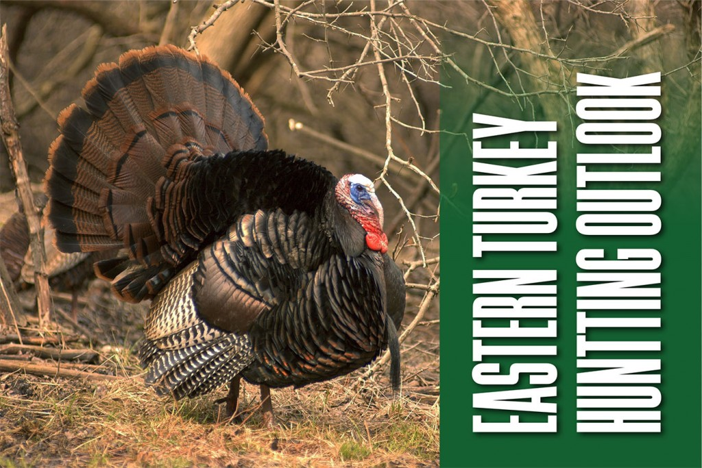 Eastern Turkey Hunting Outlook