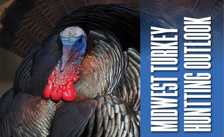 Midwest Turkey Hunting Outlook Feature