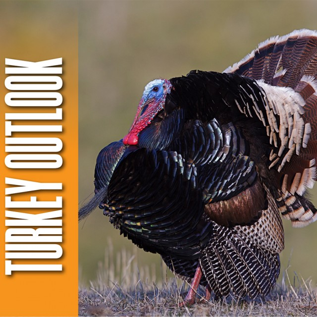 RM Turkey Hunting Outlook Feature