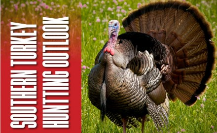 Our state-by-state spring turkey hunting outlook 2018 offers tips, locations and more great info