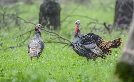 WI Turkey Hunting Outlook