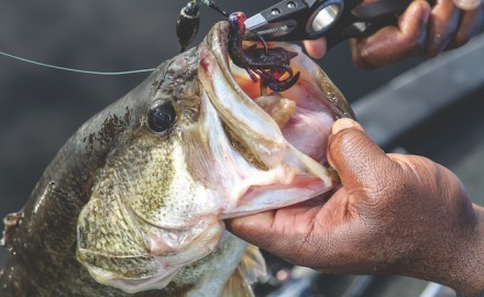 summer bass tips
