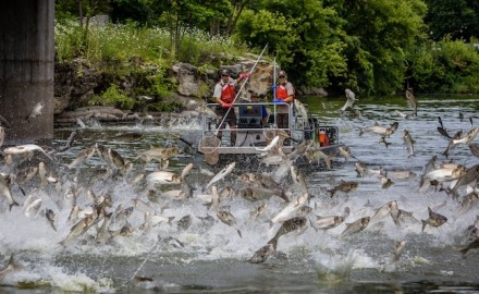 Boaters can and have been injured when hit by leaping invasive silver carp weighing up to 40