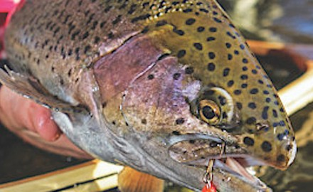 In spring some of the top patterns in Idaho fly-fishing center around streamers and egg patterns.