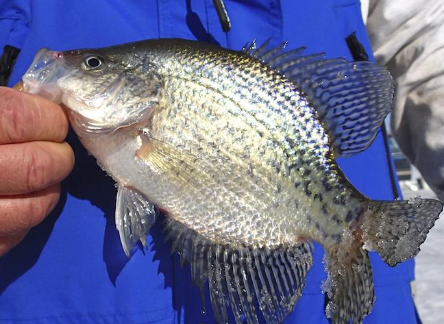 Best Crappie Fishing in America 2018
