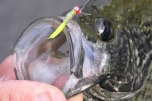 best crappie fishing
