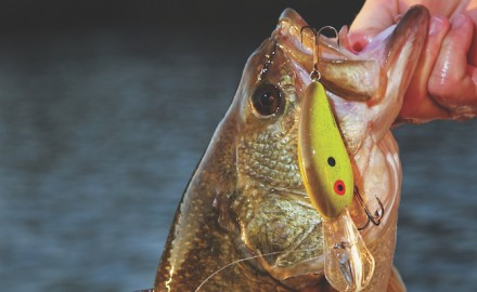 Deep-diving crankbaits can often be the ticket to some fast action for offshore bass.