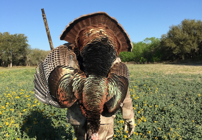 Texas turkey