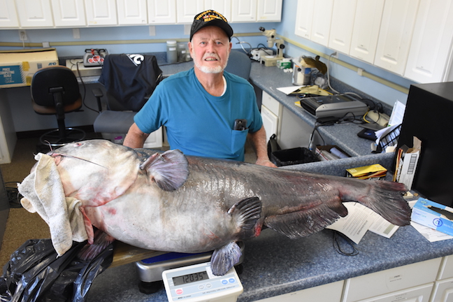 Caught on Trotline, This Blue Catfish Could've Been State Record