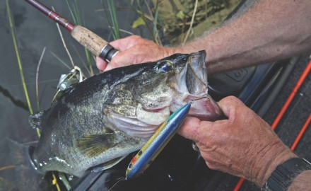 Ideally, daily waves of pre-spawn bass are heading to the shorelines this month. These will be the