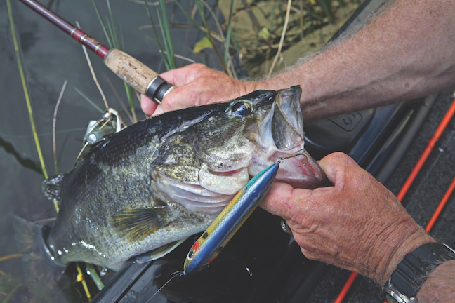 It's Simple: Follow These Tips, Catch More Spring Bass
