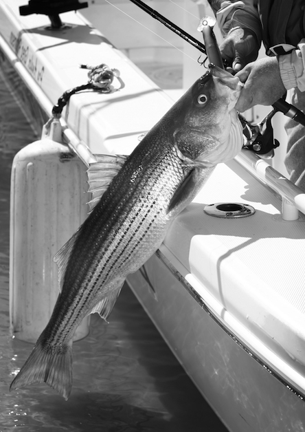 alabama fishing