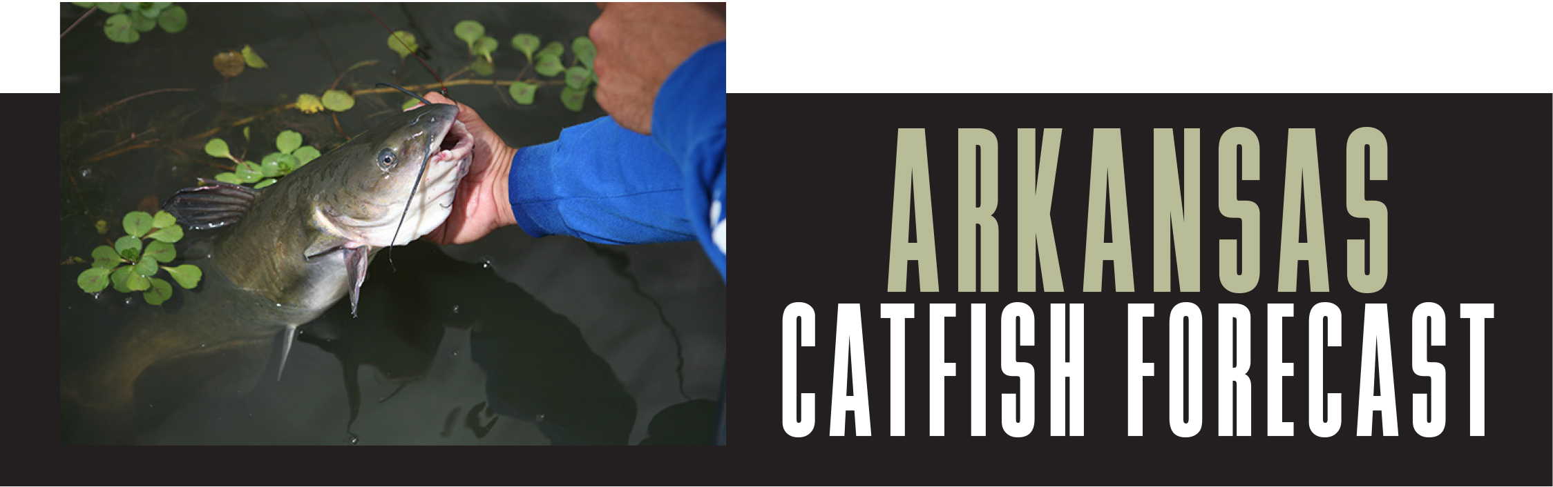 AR Catfish Forecast Banner