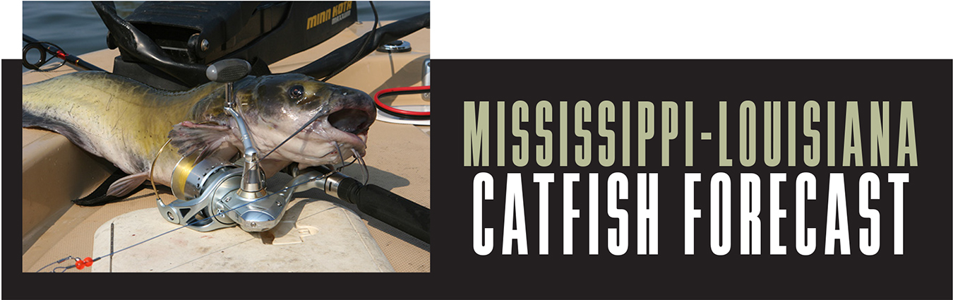 ML Catfish Forecast Banner