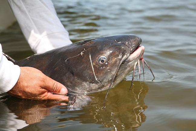 Missouri Catfish Forecast Feature