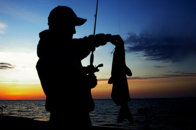 Summer Night Tactics For Big Catfish