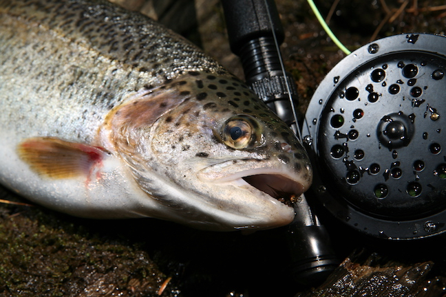 Fly-Fishing Tactics for June Trout