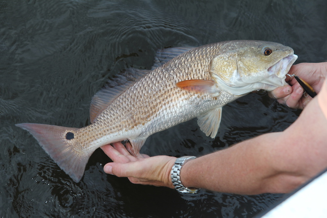 Rattle Up Redfish With These Lures